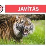 JAVÍTÁS - Szumátrai tigris érkezett a Nyíregyházi Állatpa