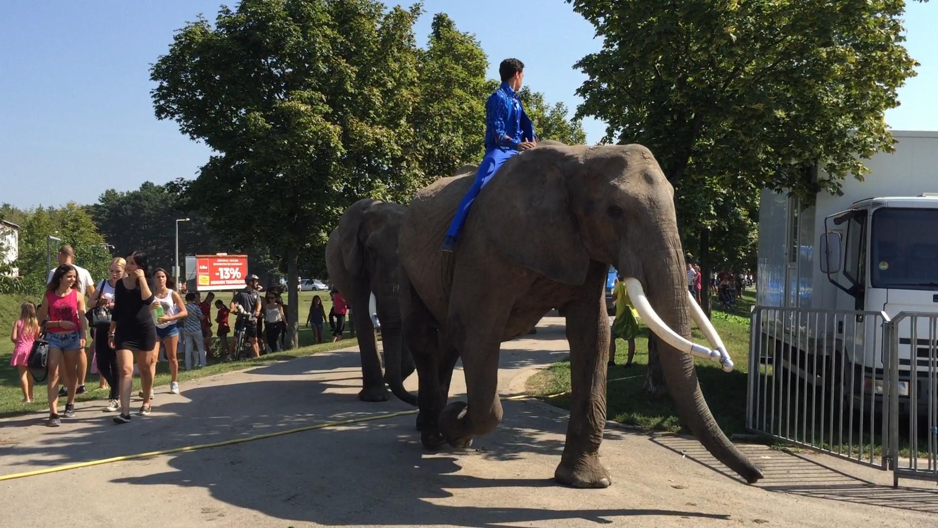 Eröffnung des Internationalen Budapester Zirkusfestivals umrahmt von ...